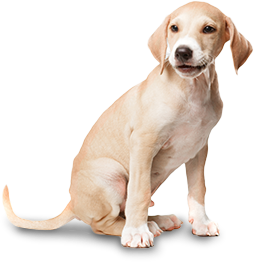 Dog Grooming, Pet Grooming, Cat Clipping, Dog Washing, Pet